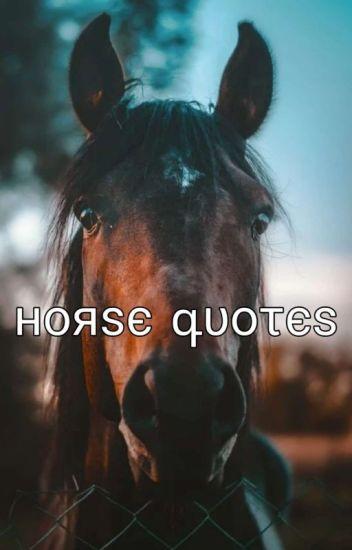 Pferde Sprüche Und Zitate ƒℓαммє Wattpad