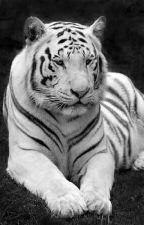 Stiles Stilinski | El tigre blanco.  by _BrissPricila223_