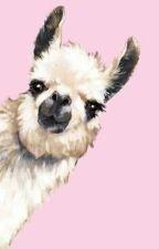 Pink fluffy llama horns by Gabriela_underscore