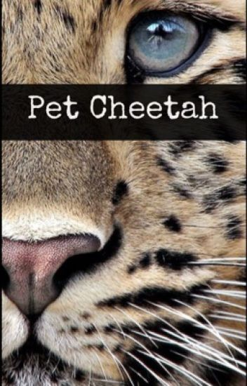 Pet Cheetah(Tøp fanfic)