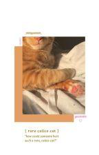 Rare Calico Cat | Yoonmin by _miniyoonmin_