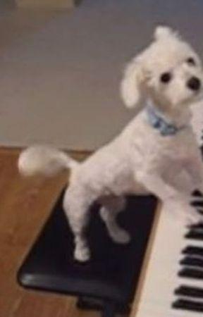 Ο σκύλος που ήθελε να μάθει πιάνο by koritsaki5