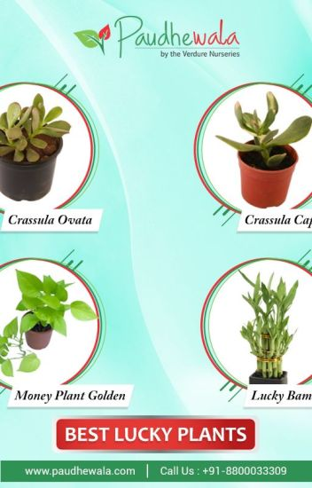 Lucky Plants Online In Delhi
