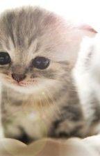 The Lost Kitten by robloxhacker987