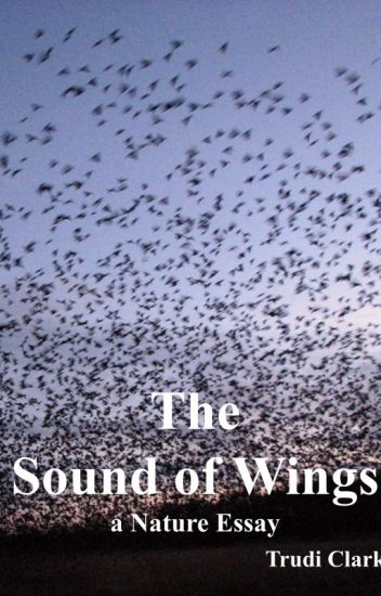 The Sound Of Wings  A Nature Essay  Trudi Clarke  Wattpad The Sound Of Wings  A Nature Essay English Essays Examples also Persuasive Essay Thesis  Professional Article Writer Service