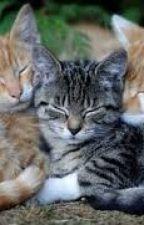 Warriors cats rp by Warriorcat90