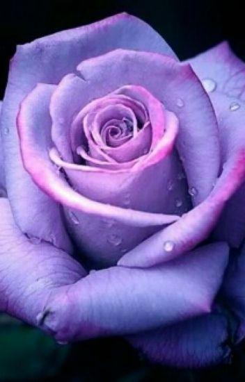 Rose Lily Potter