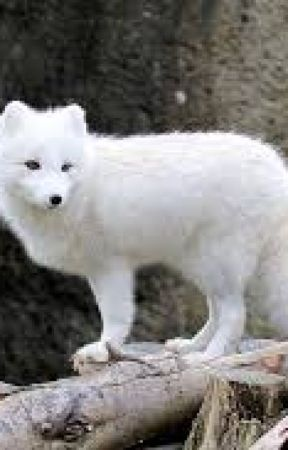 The Legend of the White Fox Book 1 The rise of the White Queen by VictoriaHastings5