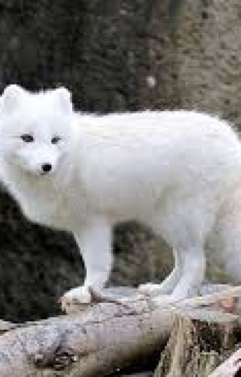 The Legend of the White Fox Book 1 The rise of the White Queen