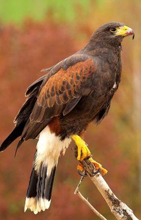 Avian--Journey by Ravensong139