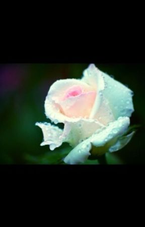 White Roses ( a scorose fanfic ) by house_cabin_district