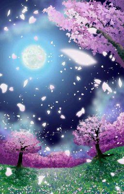 Đọc truyện Hoa anh đào trong gió ( Cherry Blossom )