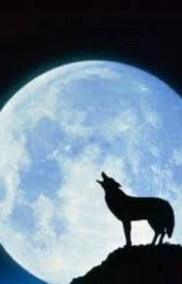 Il cacciatore di lupi antoniosoldan wattpad for Disegni di lupi da colorare