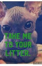 Take me to your litter. Pentatonix fanfic Book 3  by thieteenquartz