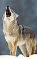 WOLFIE!!! by MargaretMcnamara