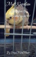 Meet Napoleon Bonaparte: A Story About My Pet Bird by ScrapMetalFlower