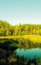 EL Bosque Encantado. by adrianre
