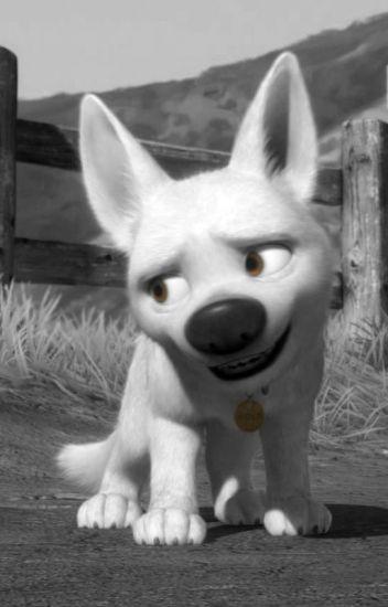 Bolt X Dog Reader Danigirl Wattpad