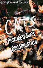 CATS Musical - Images, fanarts, texts and more I hope by magicalmistoffelees