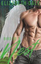 Bird of a Nest  (bow 3) by Hiddenhearts93