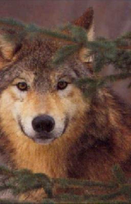 Being a Shewolf ain't EASY! by XxLiquidPosionXx
