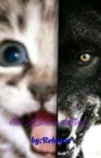 the alphas kitten by cupcakereader102