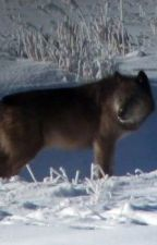 Yellowstone Wolves by Purplecreatur
