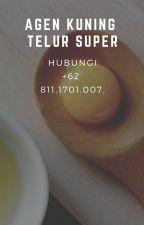 READY STOK!!! WA +62 811.1701.007, Jual Kuning Telur Mentah by agenkuningtelursuper