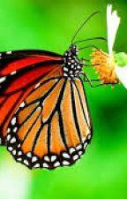 Kelebek ömrü by rumeysa762krt