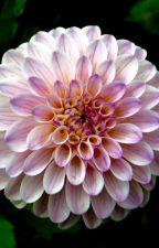 Psycho by Strangeoutcast