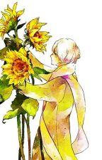 My Sunflower | {Russia X Reader} by Otaku_is_my_life