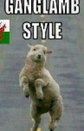 Funny sheep jokes - photo#49