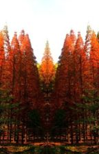 Under the Dawn Redwood- An Original Meraki Novel by merakitranslations