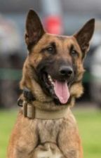 K-9 Haas True Story January 25, 2019 by CourtneyRoseRitchie