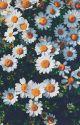 vkook   hoa cúc nhỏ by chunncumber-