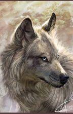 L'histoire d'une louve by MissReeze