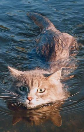 049a101782 A cat like s water - A Cat Likes Water - Wattpad