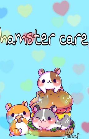 Hamster care - Syrian hamsters - Wattpad