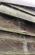 Cobwebs.  by Street_rat