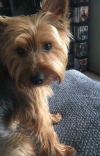 Bentley Pup by Emma3172468