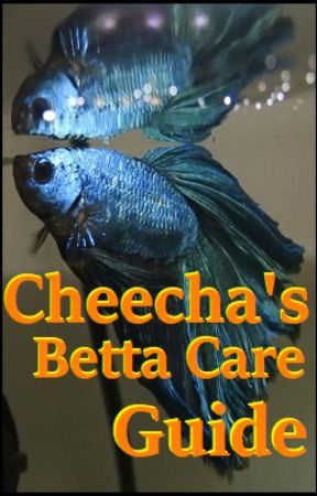 Cheecha's Betta Care Guide - 4  Personally Recommended
