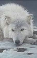 white wolf by ChristaHamilton