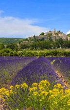Ma Provence by nourann3010