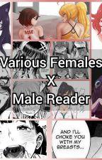 Various Females x Male Reader by nvanvjjnaivdnaivn