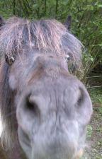 Reiter, ihre Pferde und andere Katastrophen - mein Alltag im Stall by Kayliri