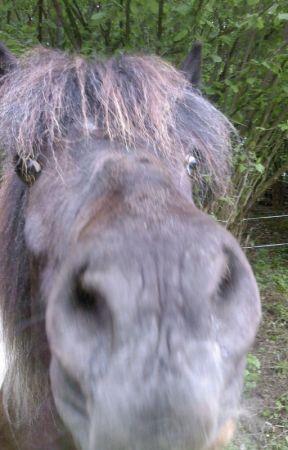 Reiter Ihre Pferde Und Andere Katastrophen Mein Alltag Im