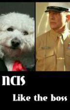 NCIS-Like the Boss by funny_jojo