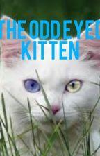 The Odd Eyed Kitten by MissAllyBelle