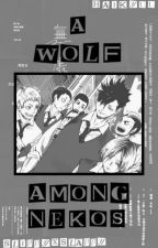 |:|A Wolf Among Nekos|:| A Haikyuu Fanfiction by LittlePureWolf