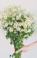 Đoá hoa dại nhỏ của tôi by AngelV270816
